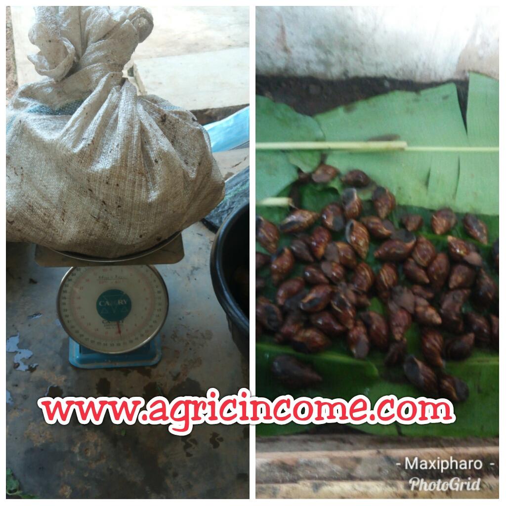 Snail Market in Nigeria: A Must Read for Every Snail Farmer