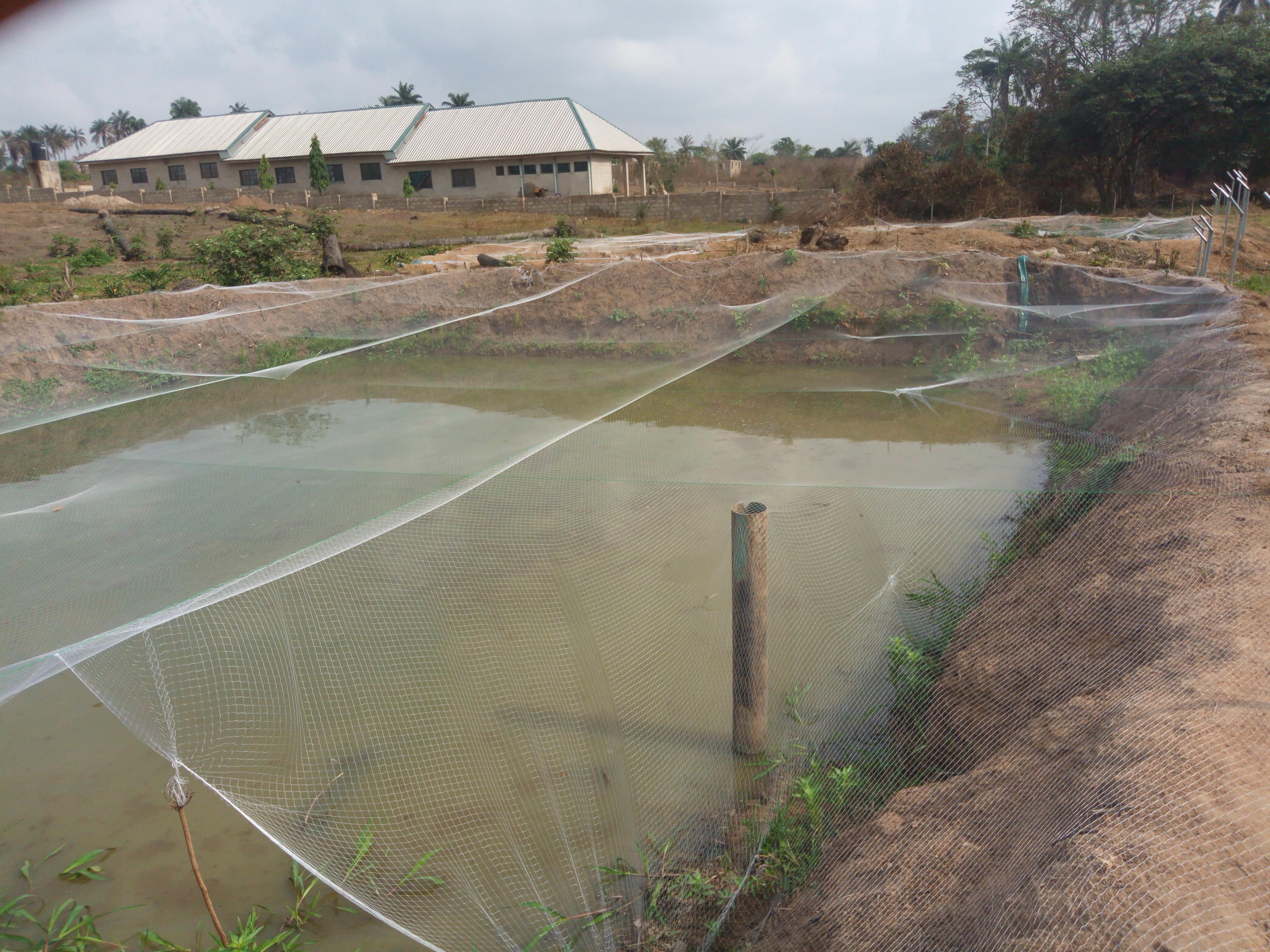 FISH FARMING AS A LUCRATIVE BUSINESS IN NIGERIA: BEGINNER GUIDE