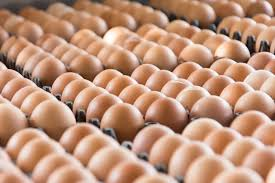Egg distribution in Nigeria