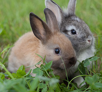 Starting a Profitable Agri-business Rabbit Farming in Nigeria
