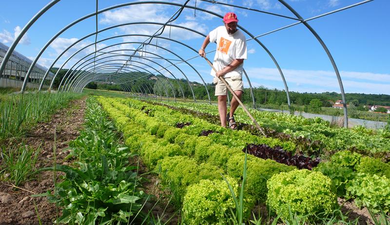Organic farming: Beginner's Guide