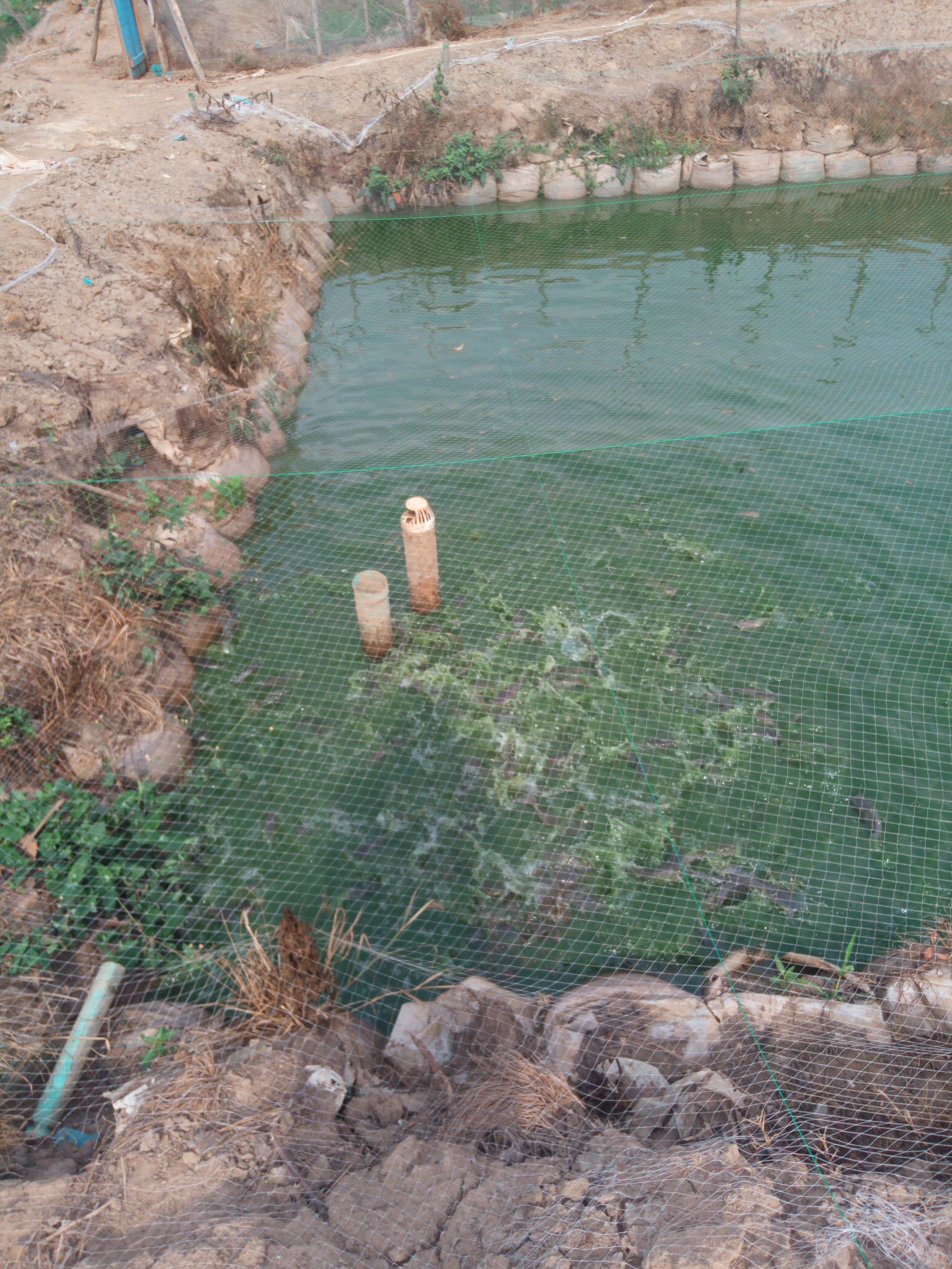 Factors affecting growth rate of fish in Nigeria