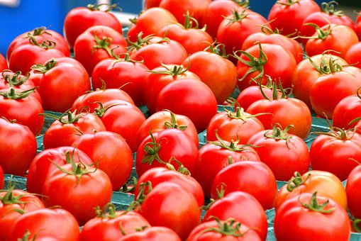 Tomato Production in Nigeria: Start Up Guide