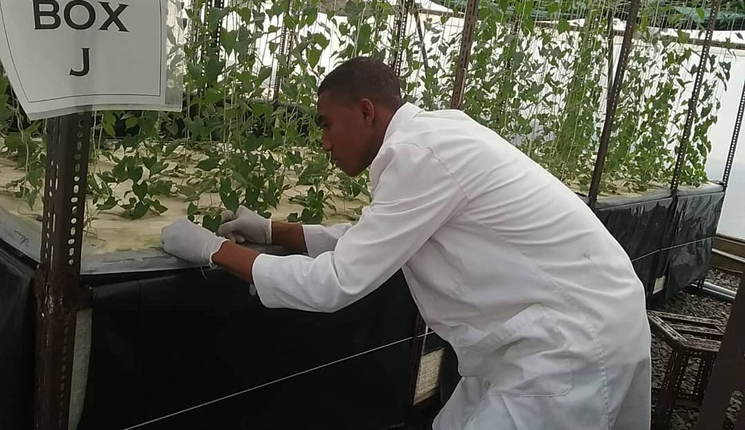 INTERVIEW SECTION: AEROPONICS FARMING IN NIGERIA