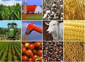 AGRO COMMODITY TRADING IN NIGERIA