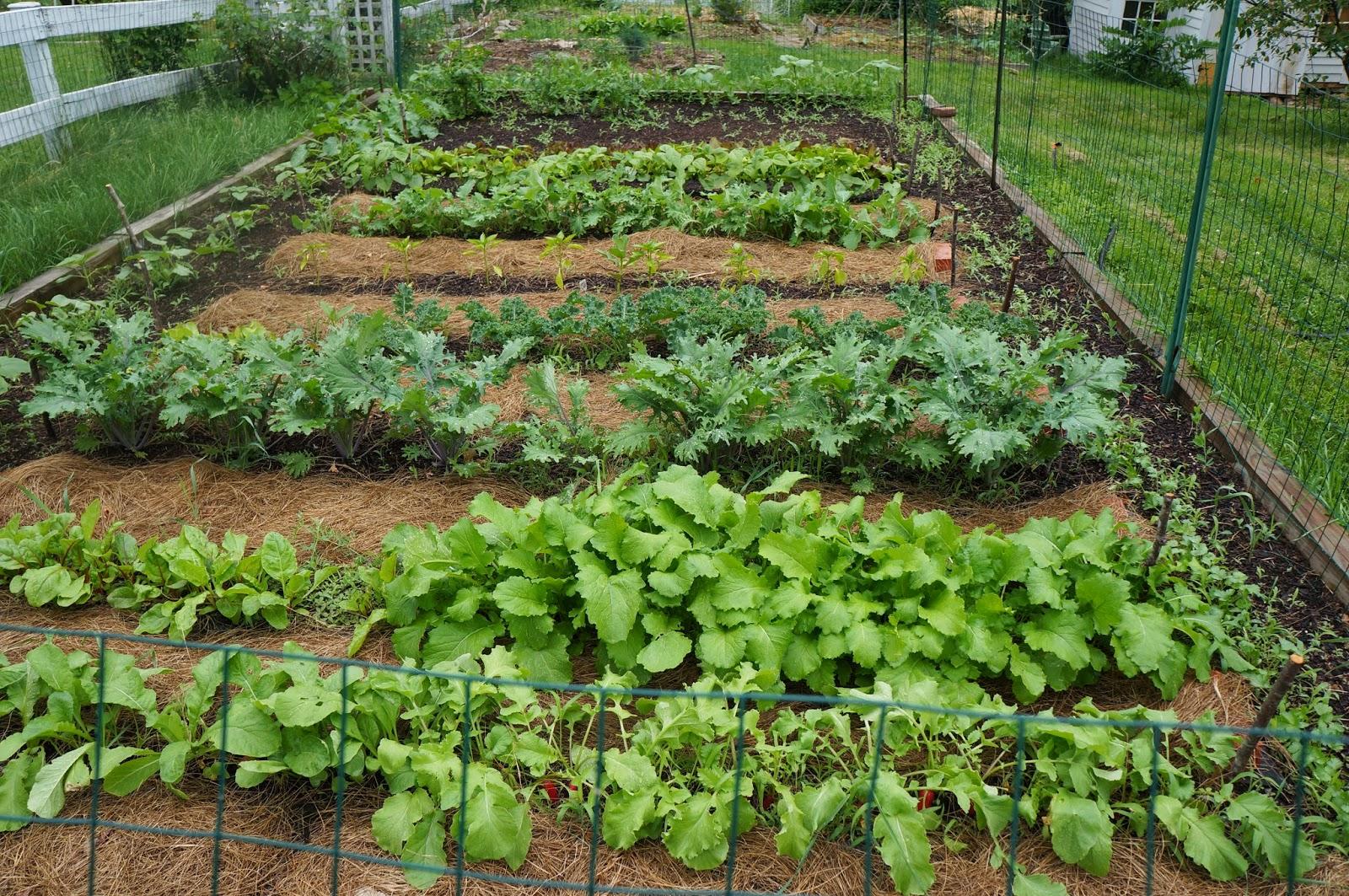 Backyard Farming Ideas For 2021
